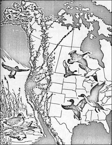 Fig. 16 -The Pacific Flyway